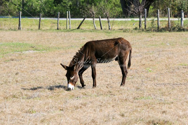 Donkey_SS082992