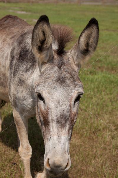 Donkey_SS095103