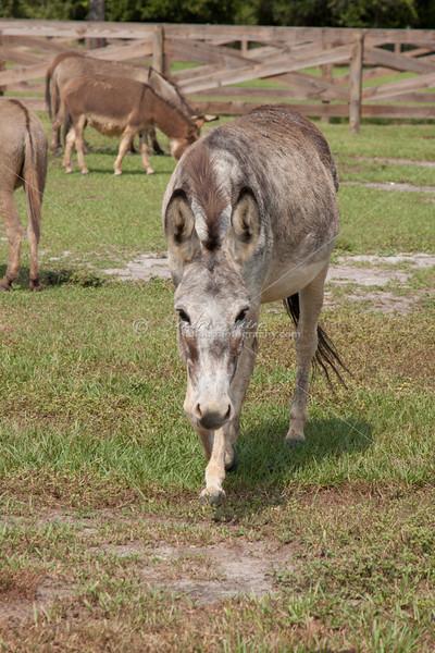 Donkey_SS095099