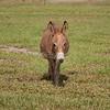 Donkey_SS095117