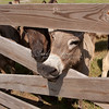 Donkeys_SS095141