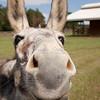 Donkey_SS095112