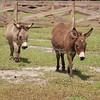 Donkeys_SS095127