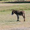 Donkey_SS082991