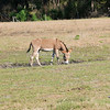 Donkey_SS082993