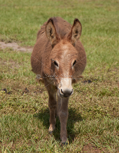 Donkey_SS095125c