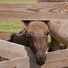Donkey_SS095138