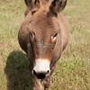 Donkey_SS095149