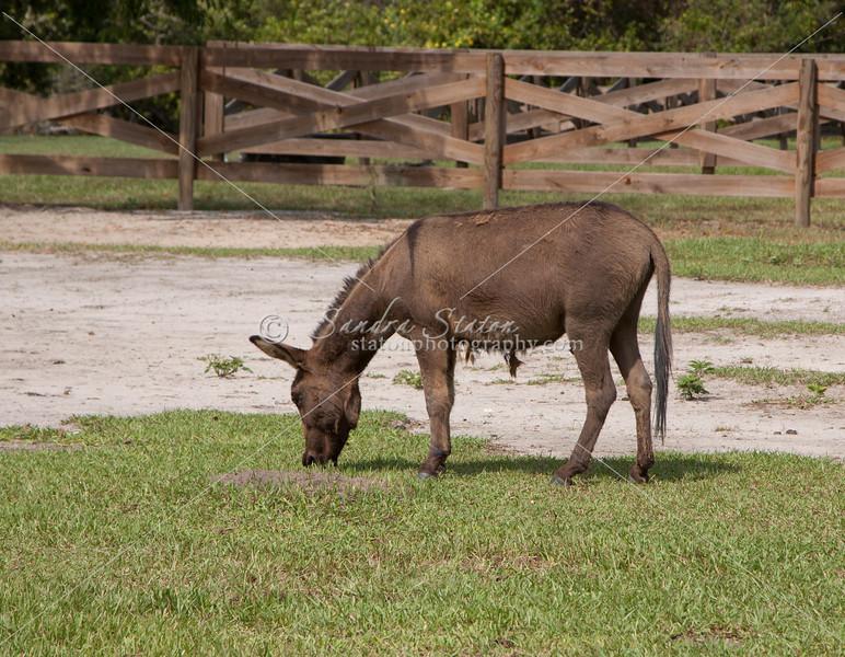 Donkey_SS095096