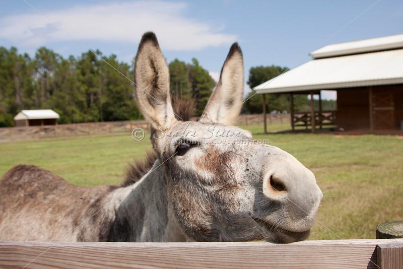 Donkey_SS095114