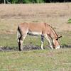 Donkey_SS082990