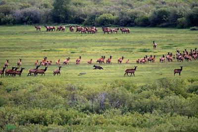 Splitting the herd.