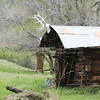 Elk skull and antlers on an old horseshoer's log cabin in Montana