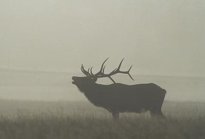 Elk-206