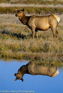 Elk-270
