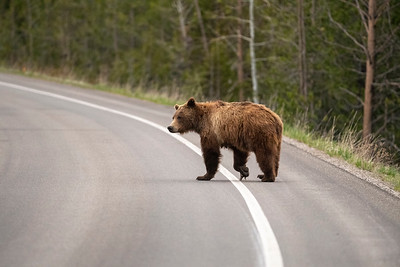 Look both ways before crossing the road.