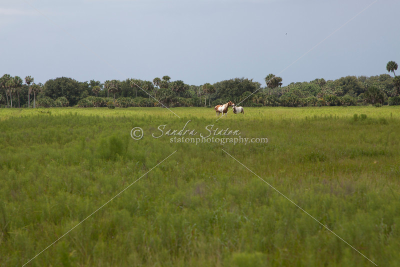 Paints in Pasture_SS7010