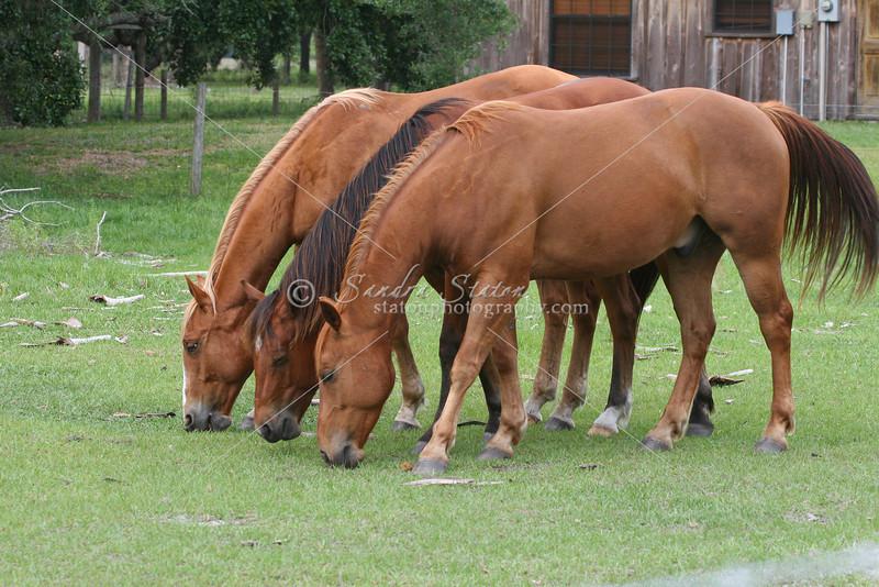 Three Horses_SS0057