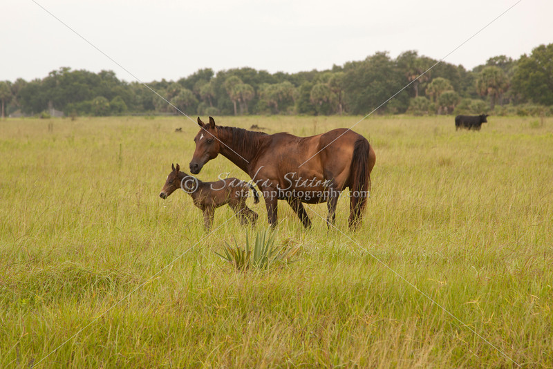 Mare with colt_SS7251