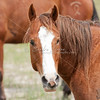 Blaze Horse_SS0874