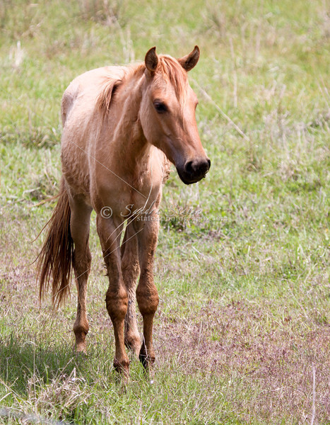 Young horse_SS0869