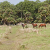 Three horses_SS2132