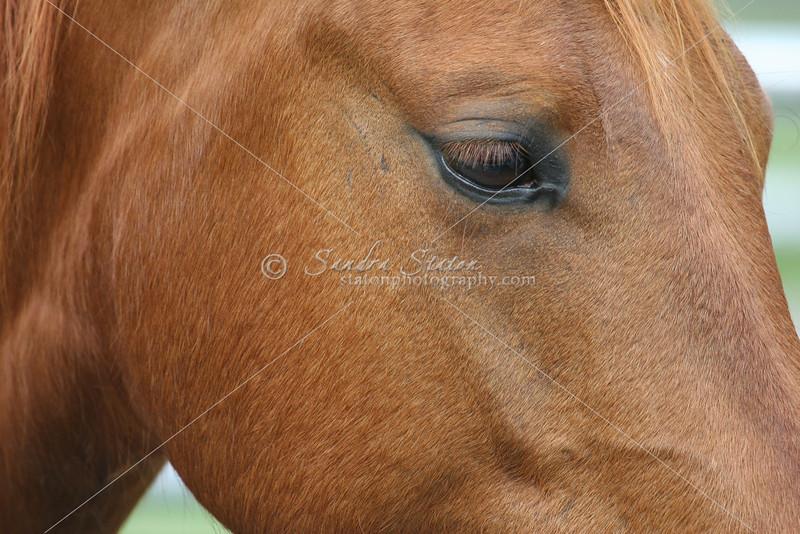 Horse face_SS0054