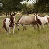 Horses_SS6992