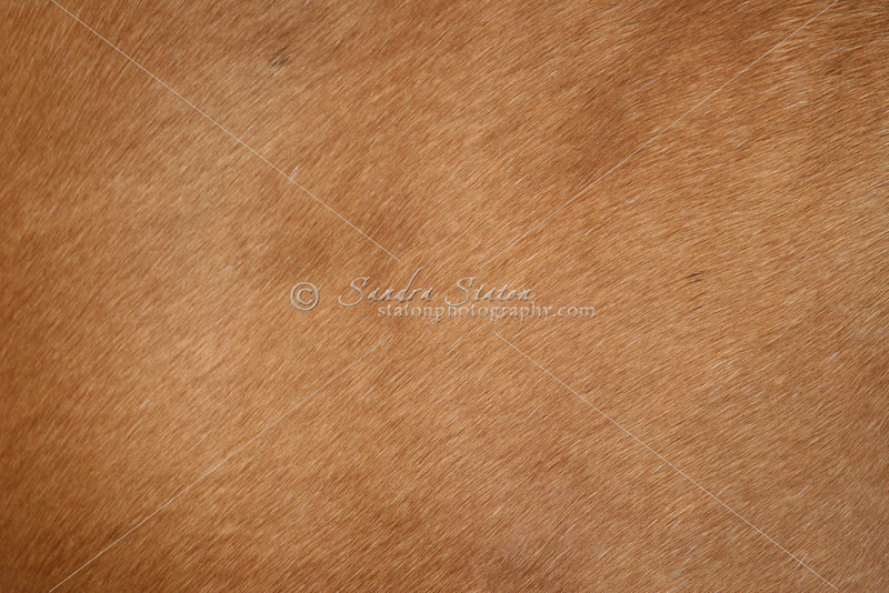 Horse Hide_SS0050