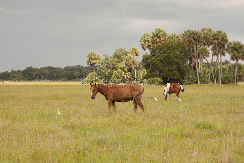Horses in pasture_SS7121