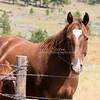 Mountain Horse_SS1858