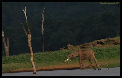 Elephant Scape, Kabini, Mysore, Karnataka, India, June 2009
