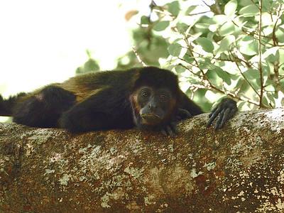 Mammals of Central America