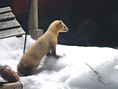 Mammals of Hokkaido