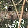 Brown-mantled Tamarin (Saguinus fuscicollis) Allpahuayo Reserve near Iquitos, Peru