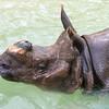 Rhino_SS3805