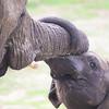 Baby Elephant_SS4239