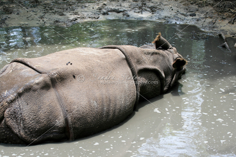 Rhino_SS3801