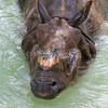 Rhino_SS3798