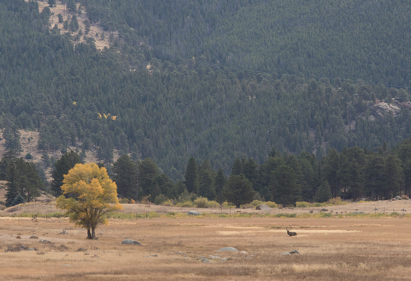 Valley with lone elk