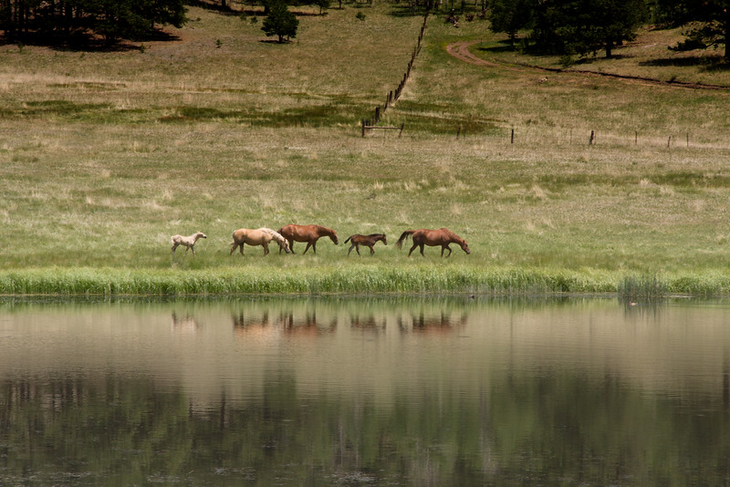 Horses in Colorado countryside