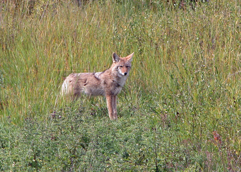 Coyote Glacier 2004-09-24 DSCN7473-1
