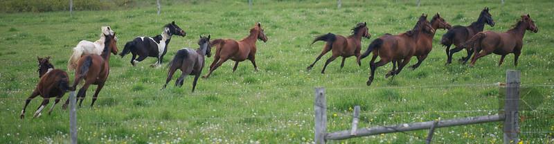 Annual Dakin Spring Horse Release