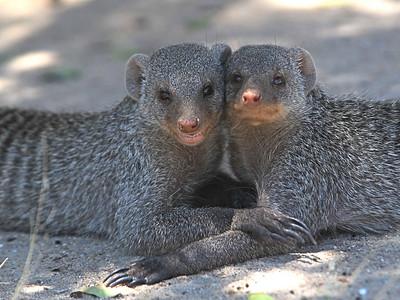 Mammals of Etosha