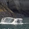 Whale, Humpback 2013-06-26 Alaska 157-1