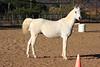 Horse Profile (Equus caballus)