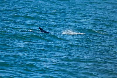 Fin Whale!
