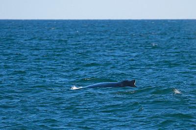 Humpback Whale!!!