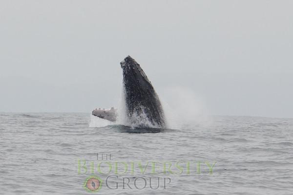 Biodiversity Group, _MG_4903