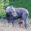 Moose Milk Breakfast